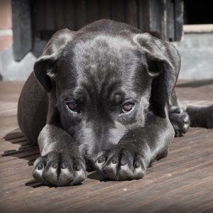 Hund-Angst