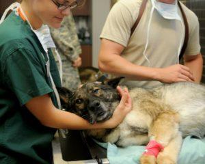Hund bei Tierarztbesuch