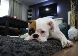 Hund alleine Zuhause